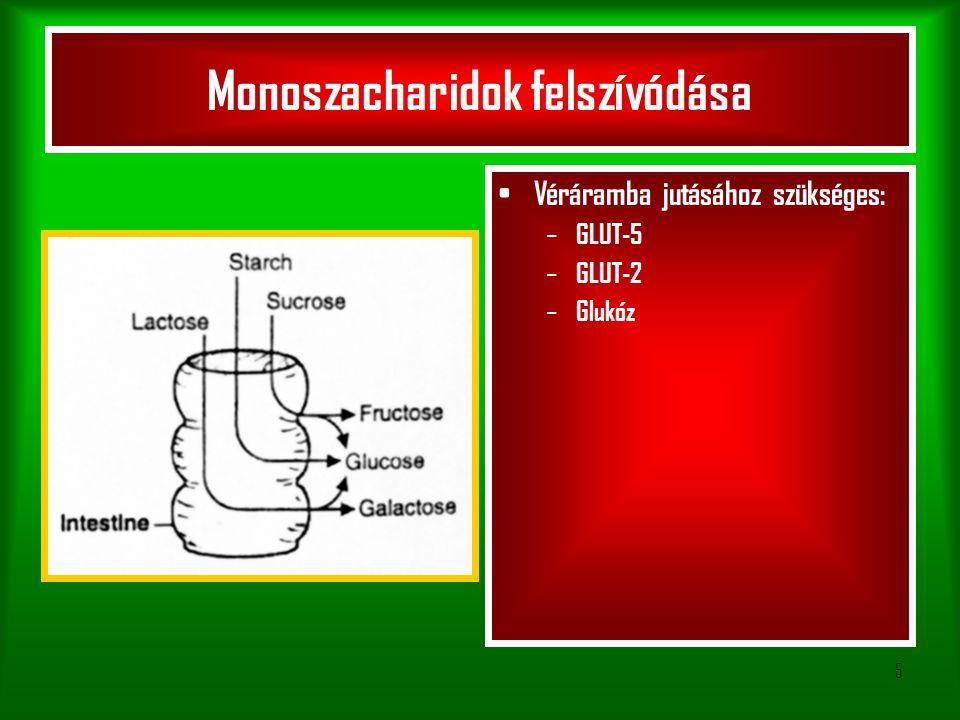 Monoszacharidok felszívódása