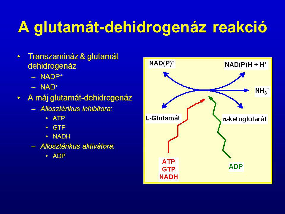 A glutamát-dehidrogenáz reakció