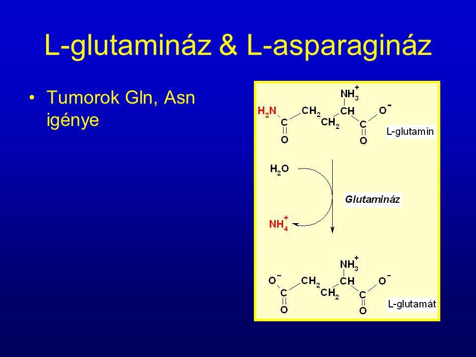 L-glutamináz & L-asparagináz