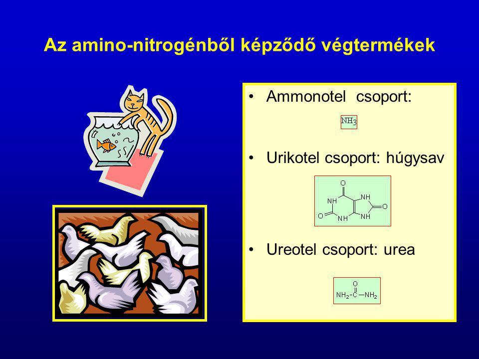 Az amino-nitrogénből képződő végtermékek