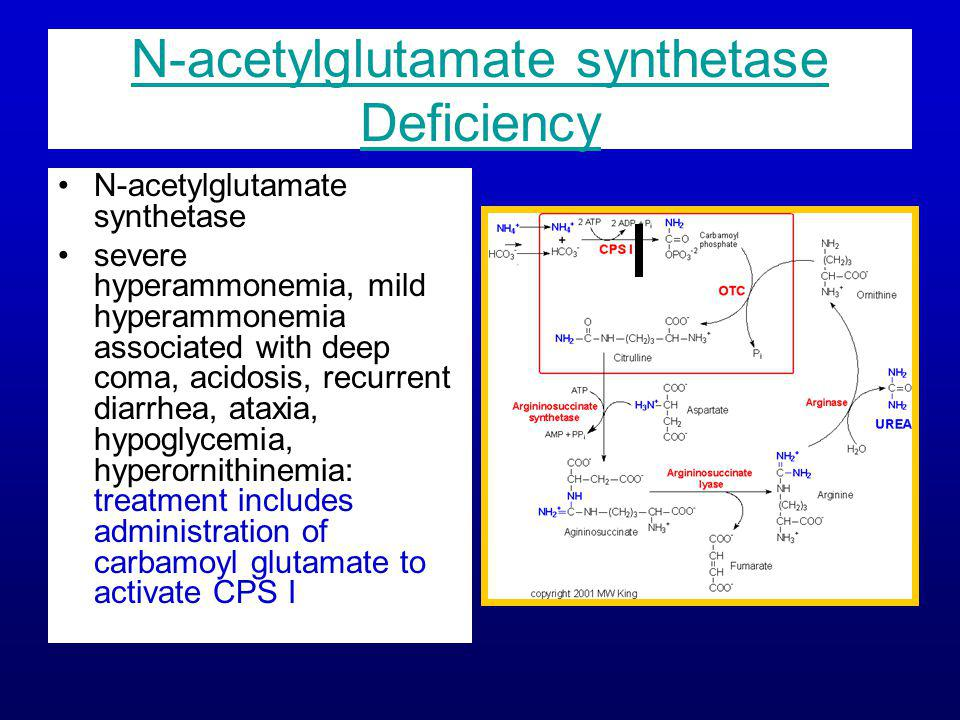 N-acetylglutamate synthetase Deficiency