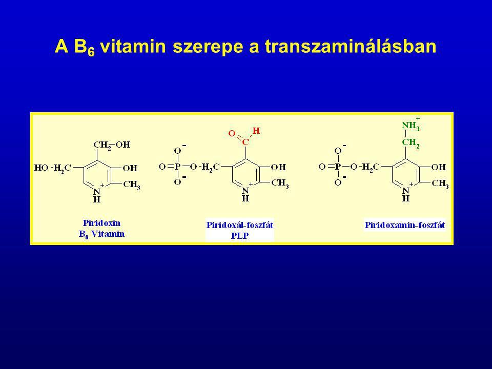 A B6 vitamin szerepe a transzaminálásban