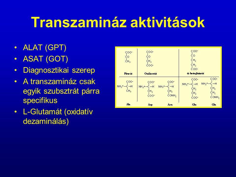 Transzamináz aktivitások