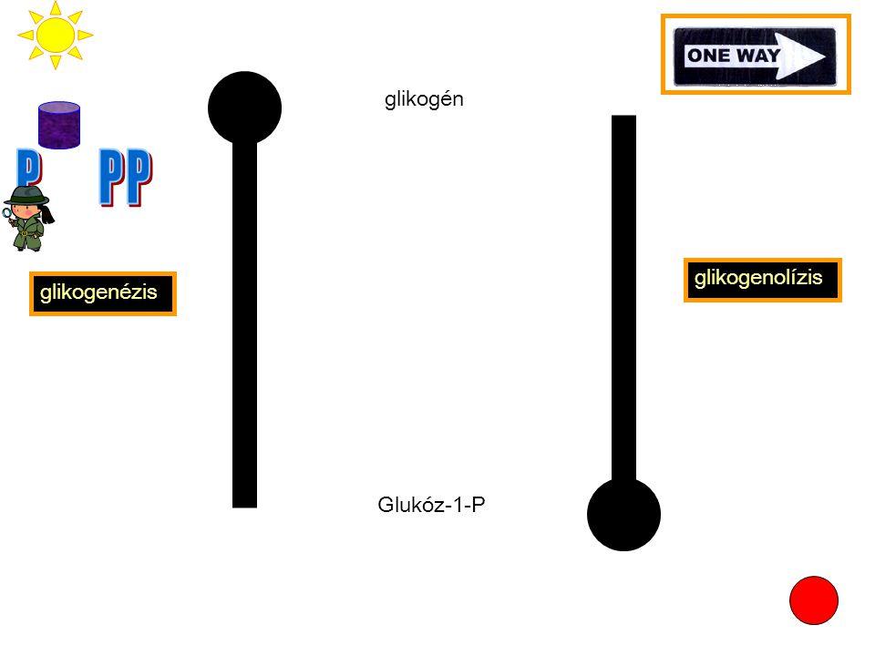 glikogén P P P glikogenolízis glikogenézis Glukóz-1-P