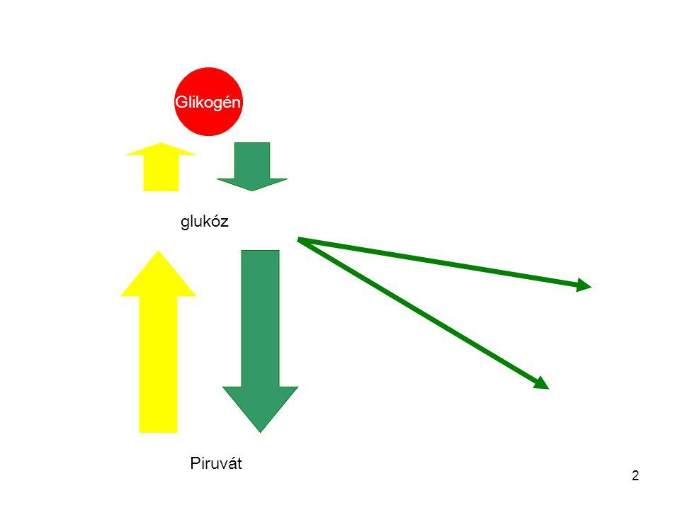 Glikogén glukóz Piruvát