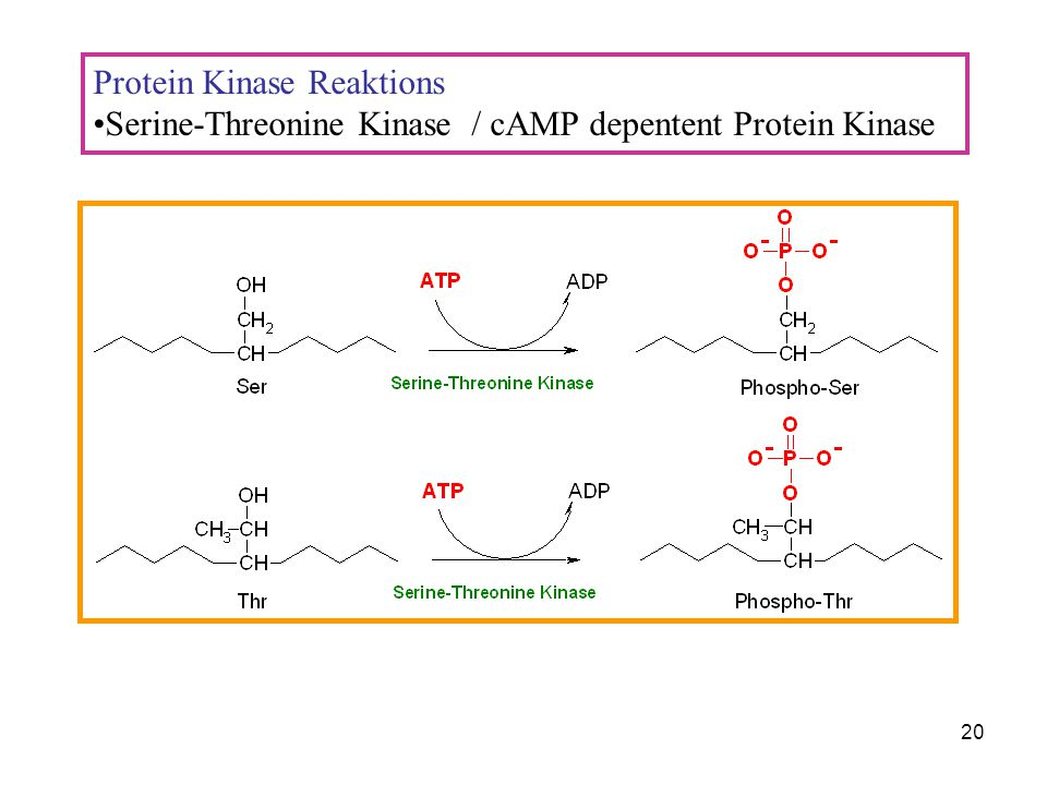 Protein Kinase Reaktions