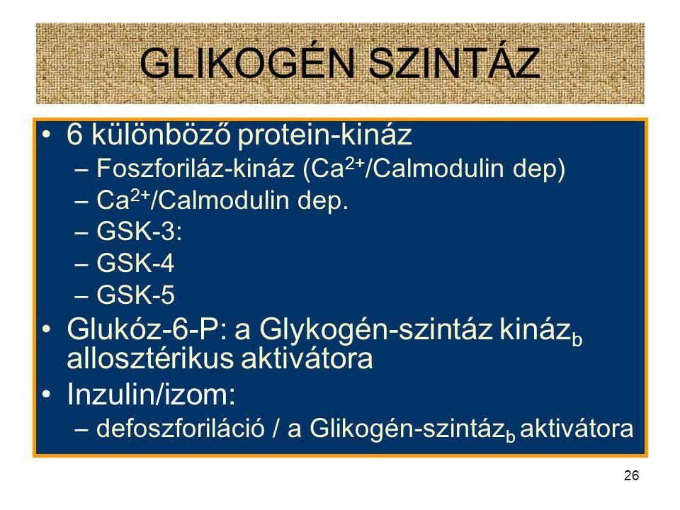 GLIKOGÉN SZINTÁZ 6 különböző protein-kináz