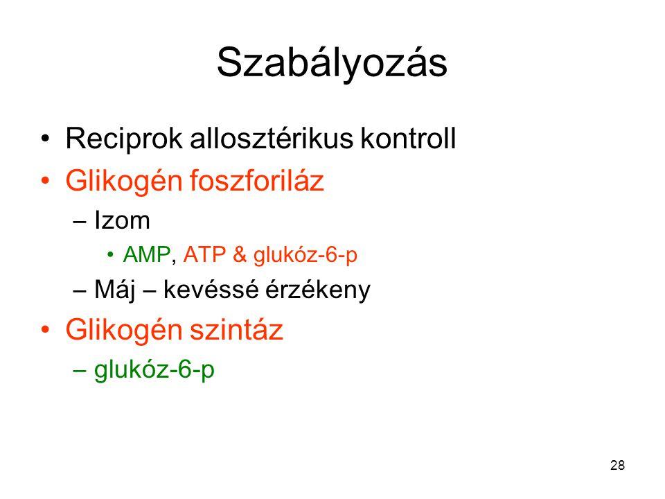 Szabályozás Reciprok allosztérikus kontroll Glikogén foszforiláz