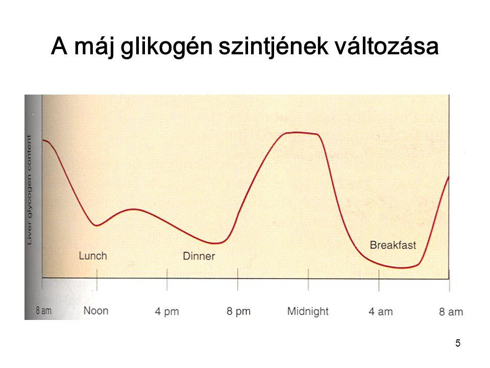 A máj glikogén szintjének változása