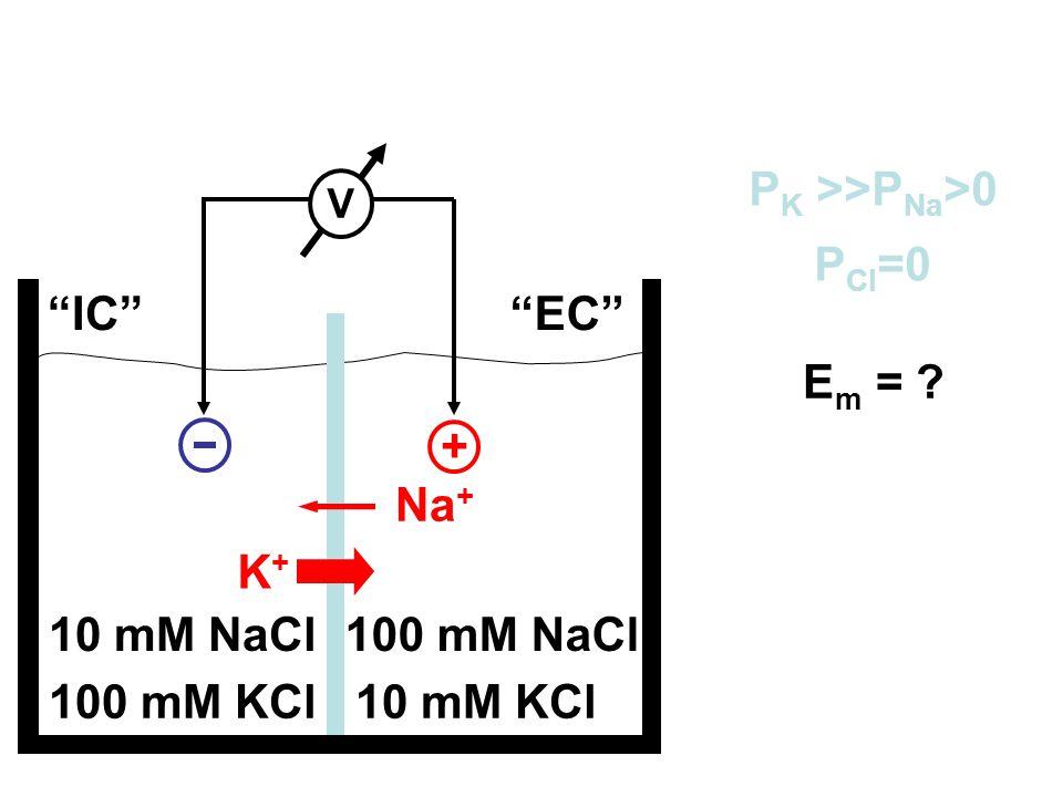 + PK >>PNa>0 PCl=0 IC EC Em = Na+ K+ 10 mM NaCl