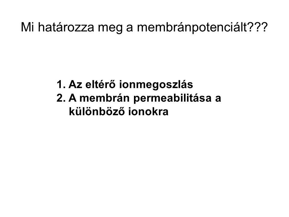 Mi határozza meg a membránpotenciált