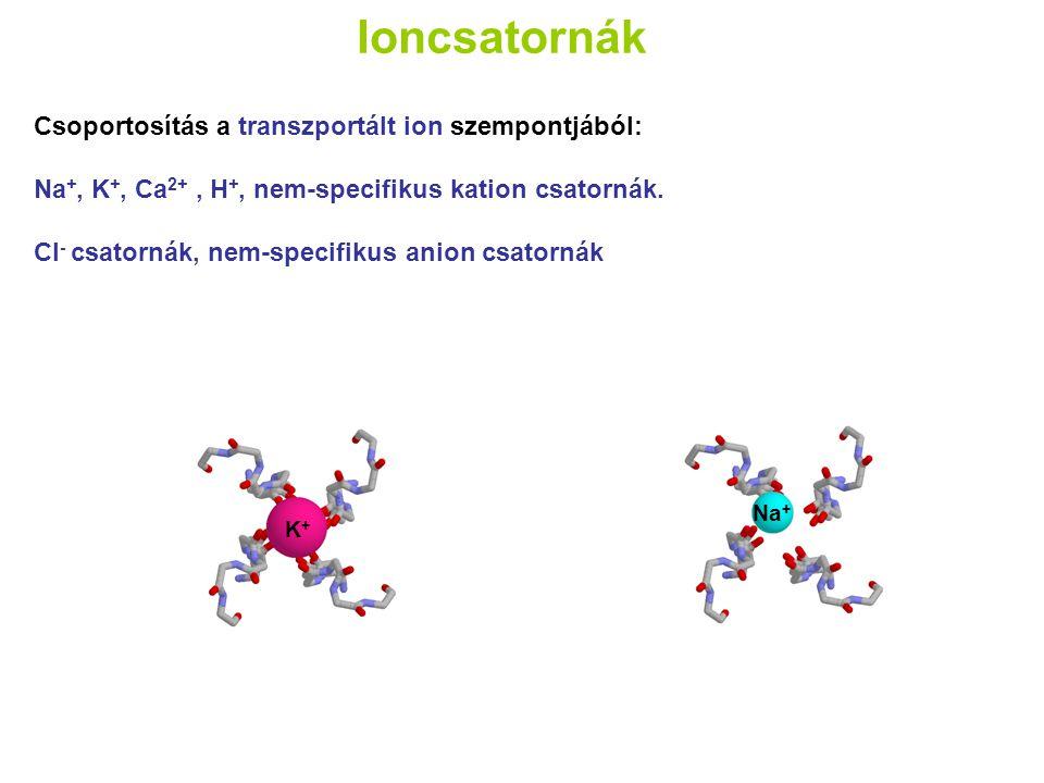 Ioncsatornák Csoportosítás a transzportált ion szempontjából: