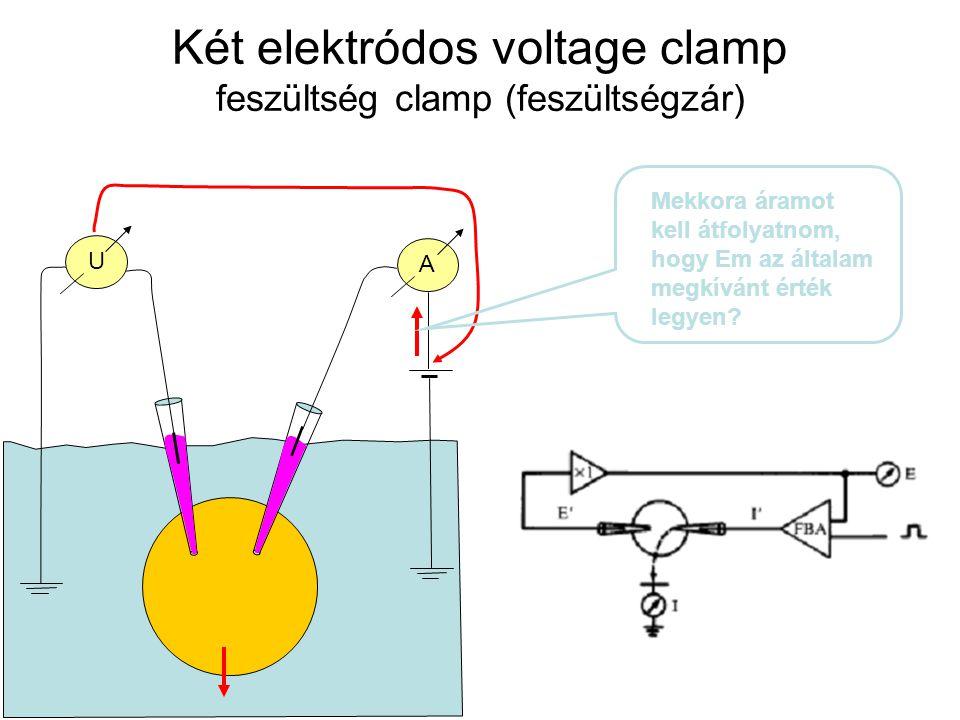 Két elektródos voltage clamp feszültség clamp (feszültségzár)