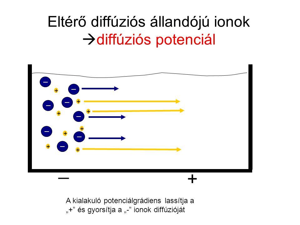 Eltérő diffúziós állandójú ionok diffúziós potenciál
