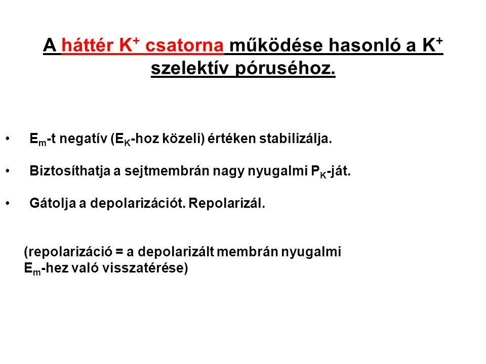 A háttér K+ csatorna működése hasonló a K+