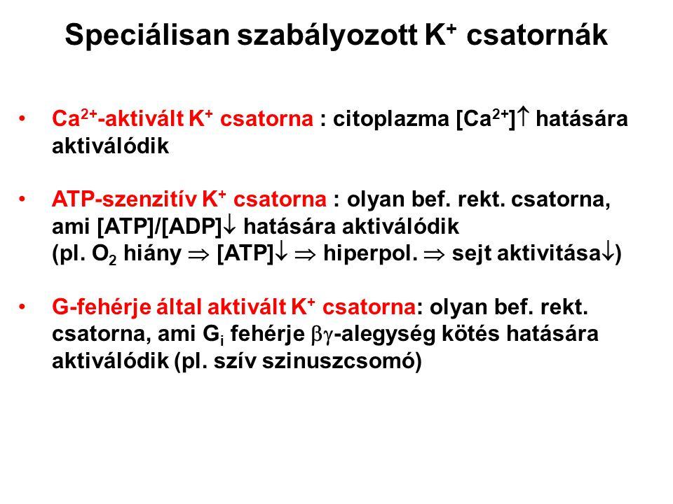 Speciálisan szabályozott K+ csatornák