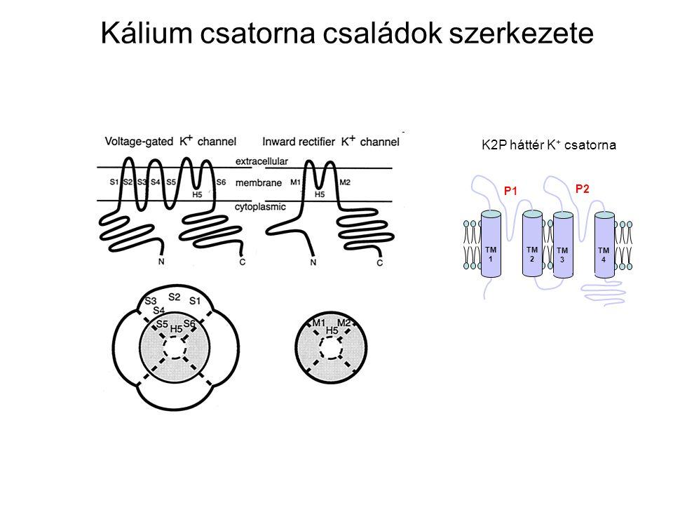 Kálium csatorna családok szerkezete