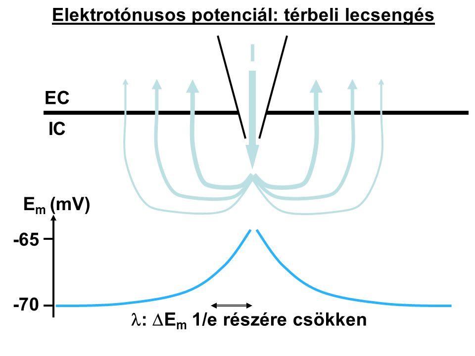 Elektrotónusos potenciál: térbeli lecsengés