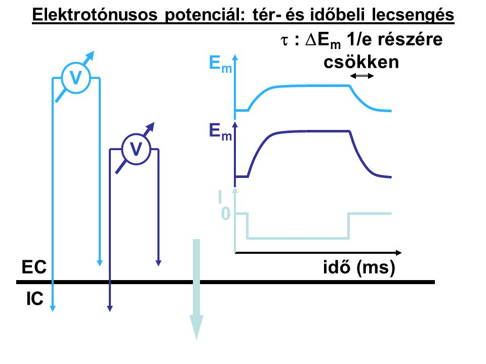 Elektrotónusos potenciál: tér- és időbeli lecsengés