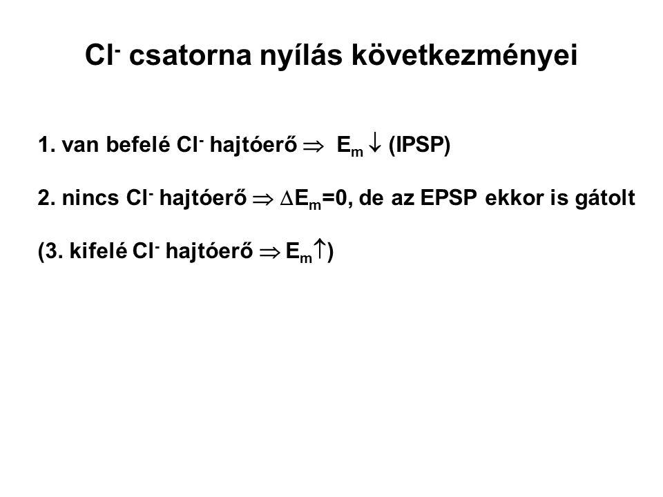 Cl- csatorna nyílás következményei