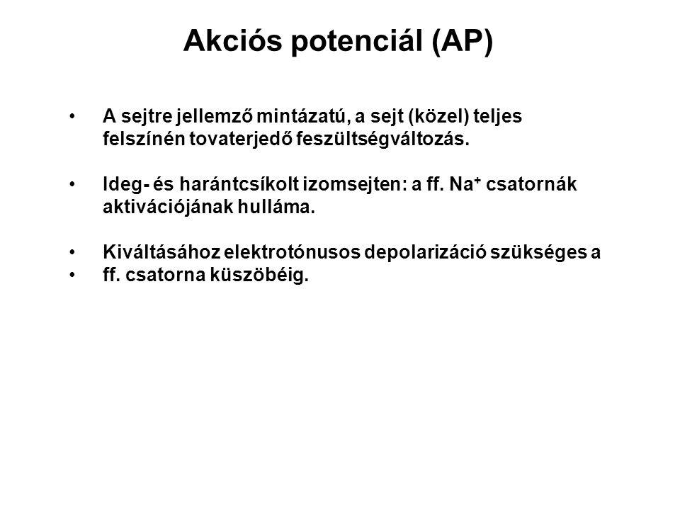 Akciós potenciál (AP) A sejtre jellemző mintázatú, a sejt (közel) teljes felszínén tovaterjedő feszültségváltozás.
