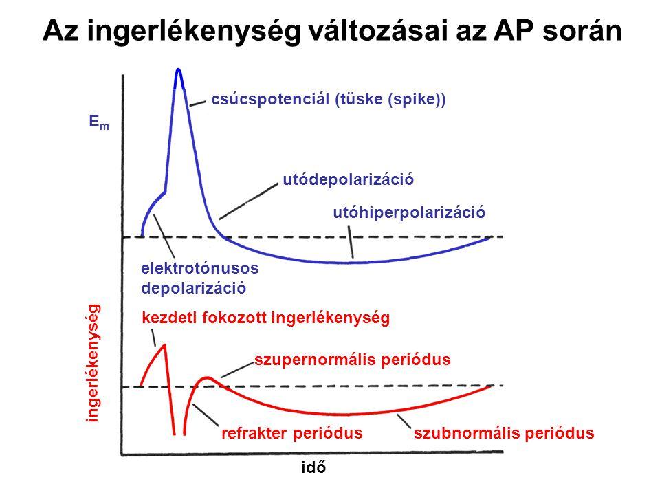 Az ingerlékenység változásai az AP során