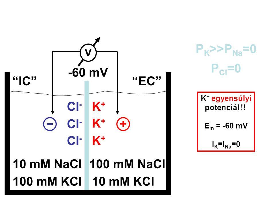 + Cl- K+ -60 mV PK>>PNa=0 PCl=0 IC EC Em = 10 mM NaCl