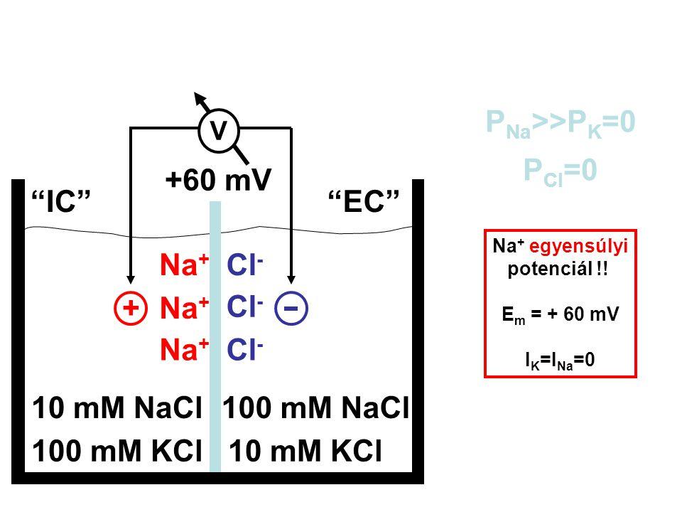 + Na+ Cl- +60 mV PNa>>PK=0 PCl=0 IC EC Em = 10 mM NaCl