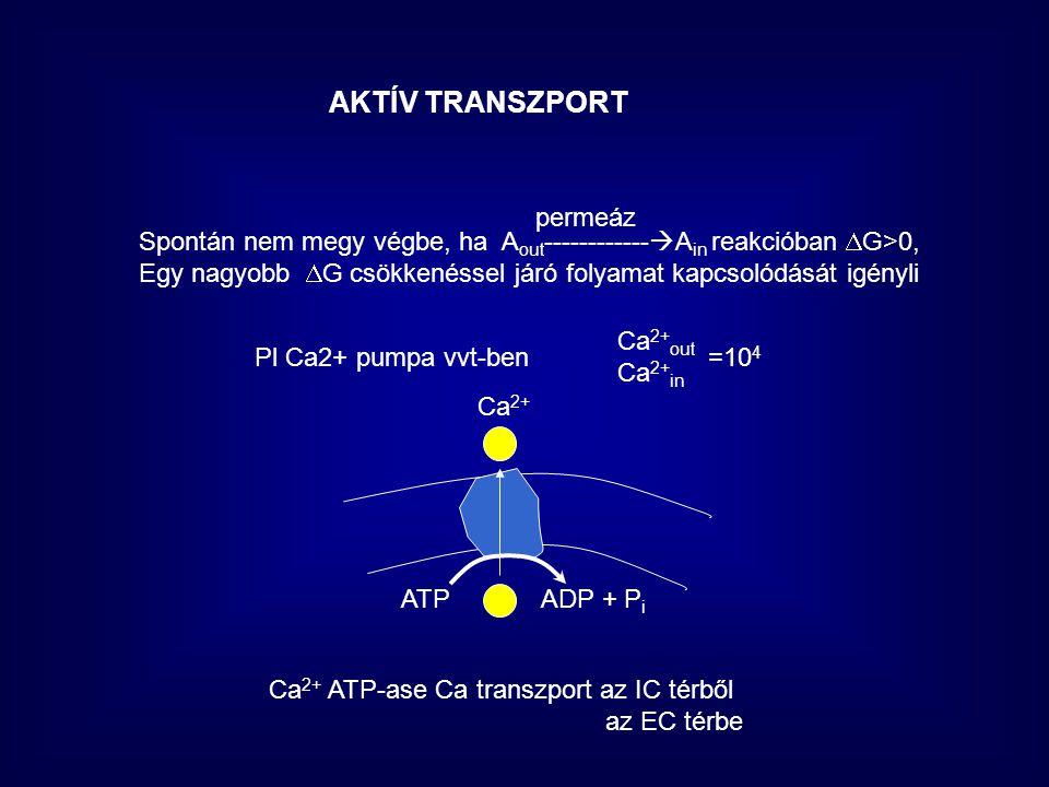 AKTÍV TRANSZPORT permeáz