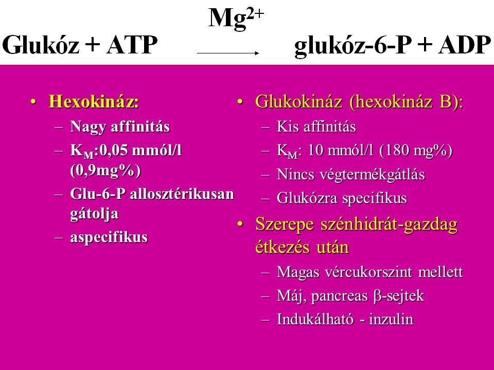 Glukokináz (hexokináz B):