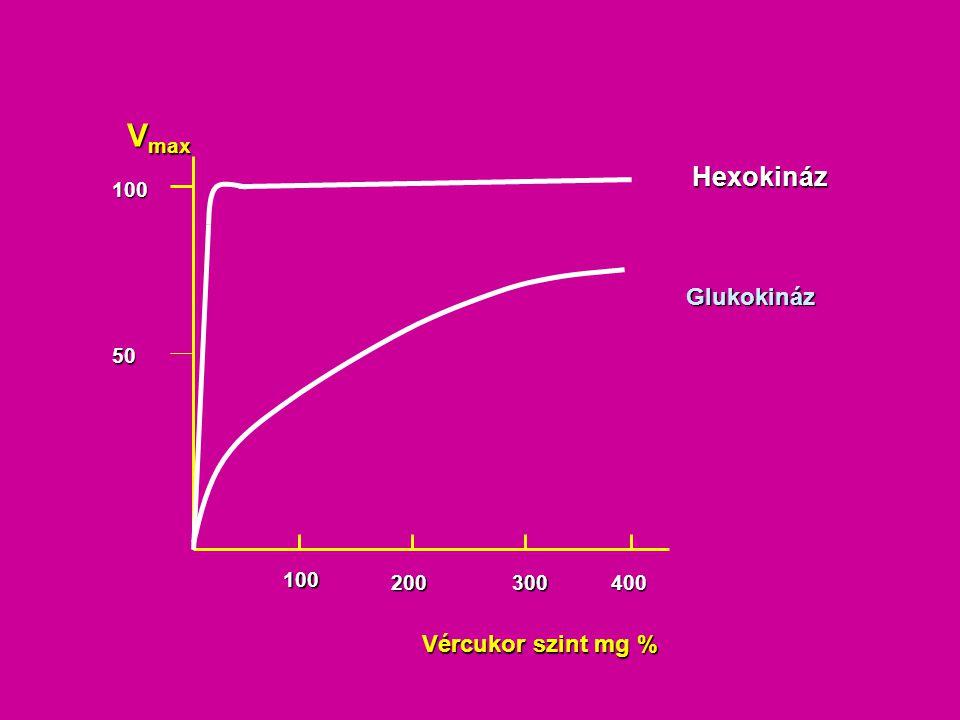 Vmax Hexokináz 100 Glukokináz 50 100 200 300 400 Vércukor szint mg %
