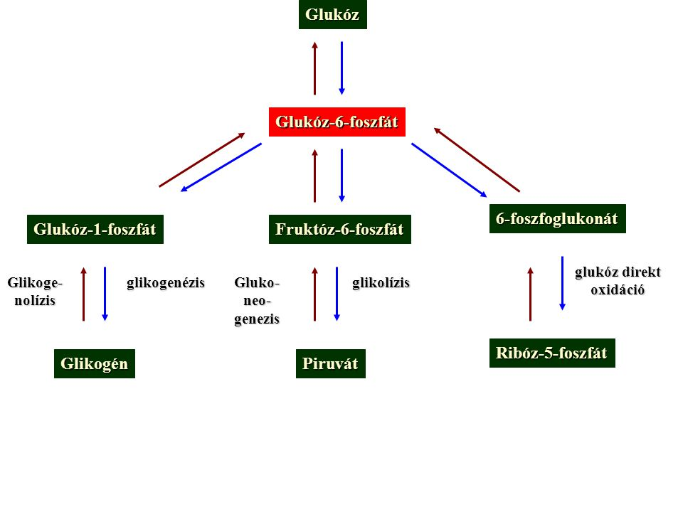 Glukóz Glukóz-6-foszfát 6-foszfoglukonát Glukóz-1-foszfát