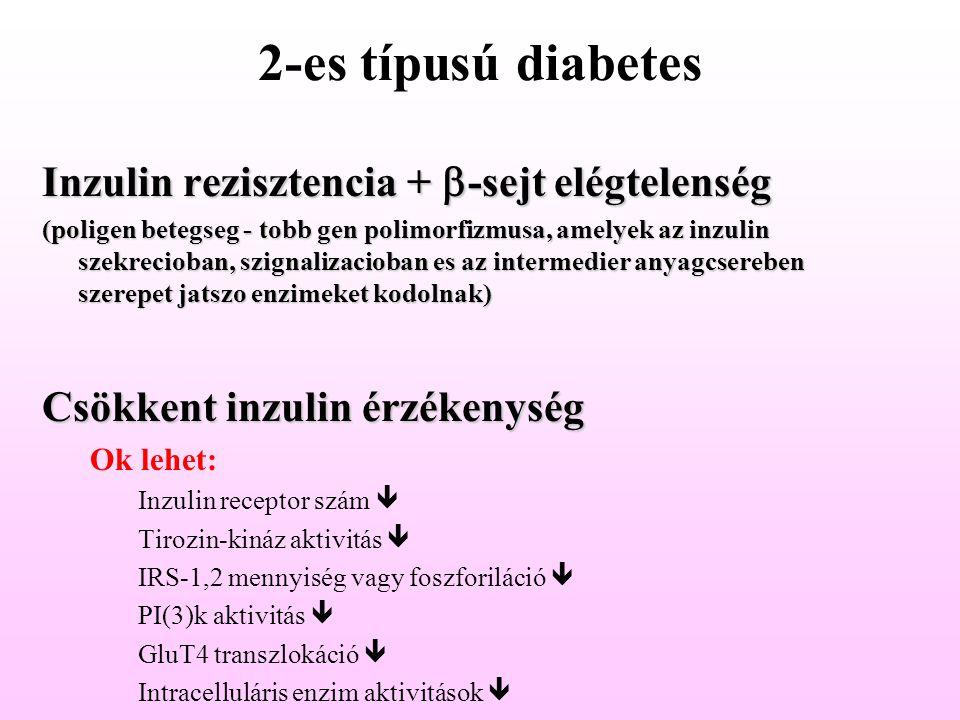 2-es típusú diabetes Inzulin rezisztencia + b-sejt elégtelenség