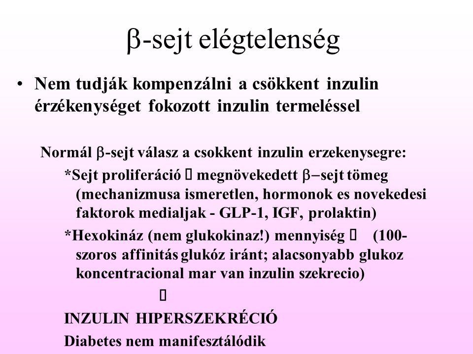 b-sejt elégtelenség Nem tudják kompenzálni a csökkent inzulin érzékenységet fokozott inzulin termeléssel.