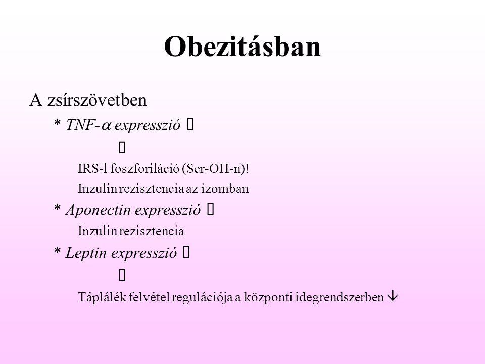 Obezitásban A zsírszövetben * TNF-a expresszió á ê