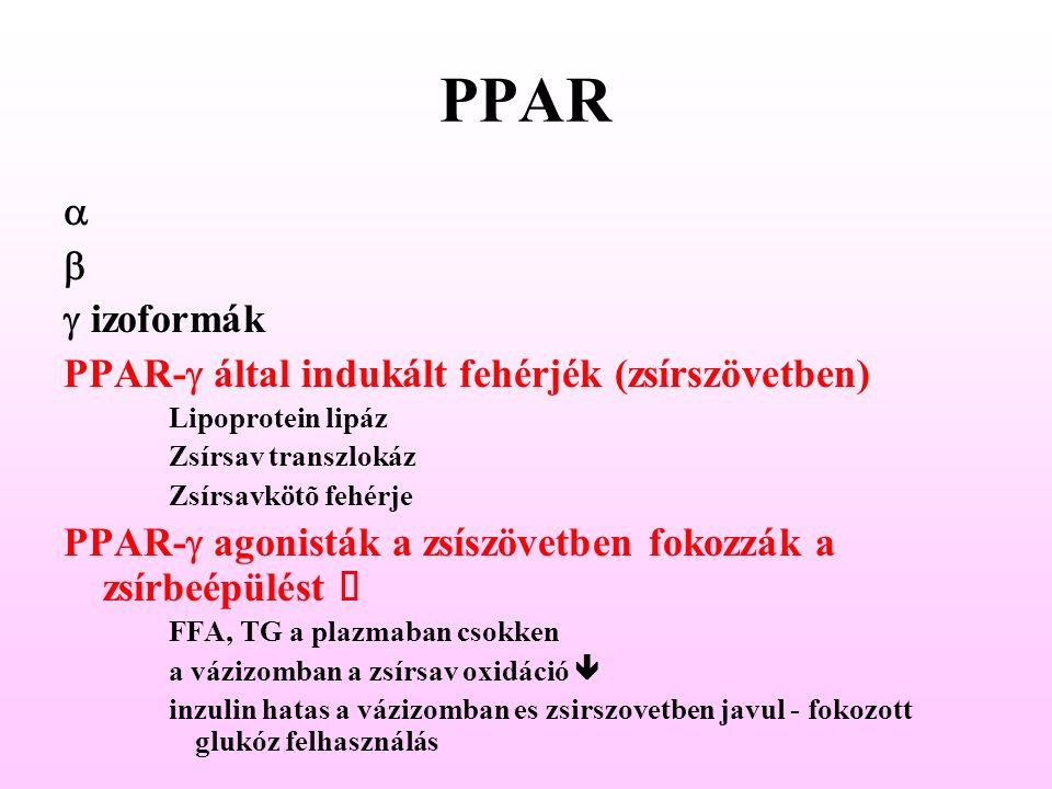 PPAR a b g izoformák PPAR-g által indukált fehérjék (zsírszövetben)