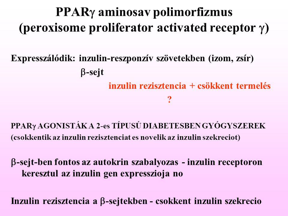 PPARg aminosav polimorfizmus (peroxisome proliferator activated receptor g)