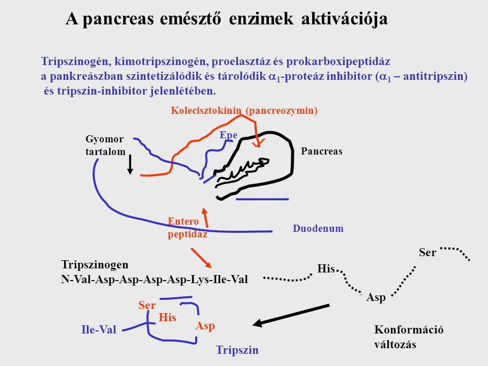 A pancreas emésztő enzimek aktivációja