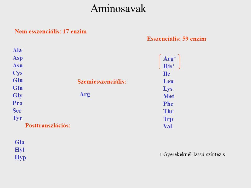 Aminosavak + Gyerekeknél lassú szintézis Nem esszenciális: 17 enzim