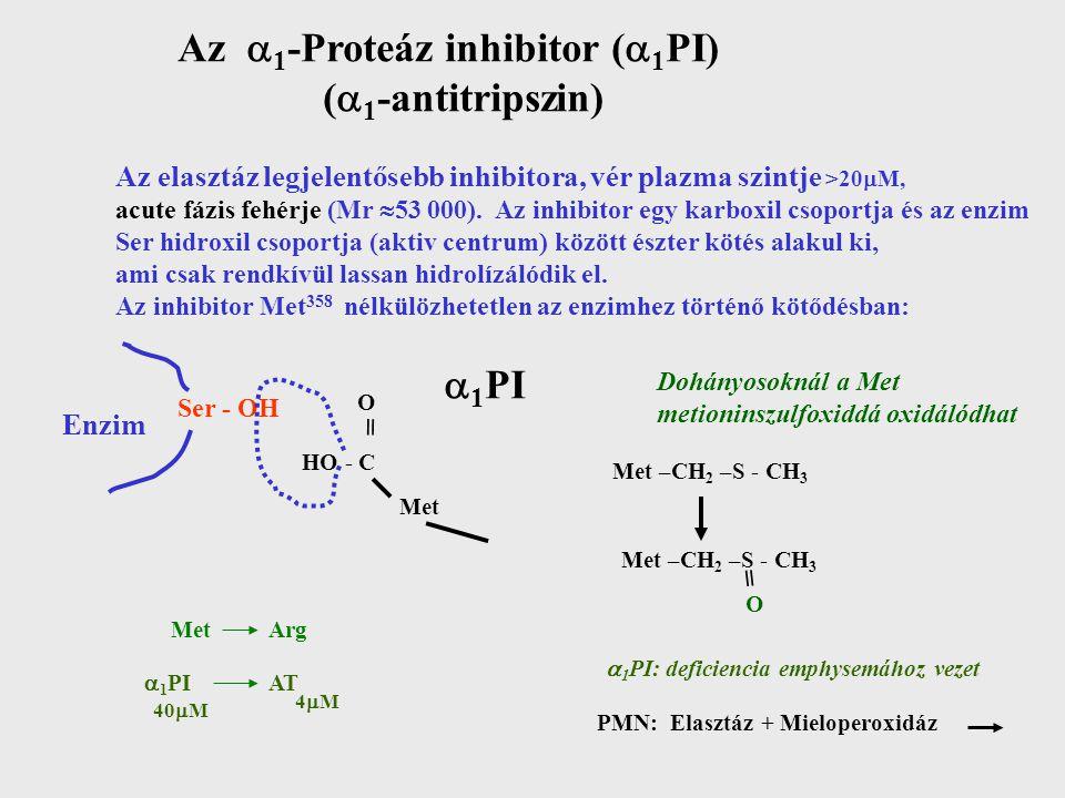 Az 1-Proteáz inhibitor (1PI) (1-antitripszin)