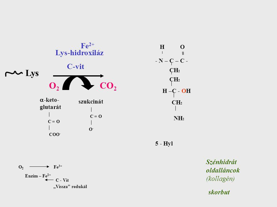 Lys O2 CO2 Fe2+ Lys-hidroxiláz C-vit Szénhidrát oldalláncok (kollagén)
