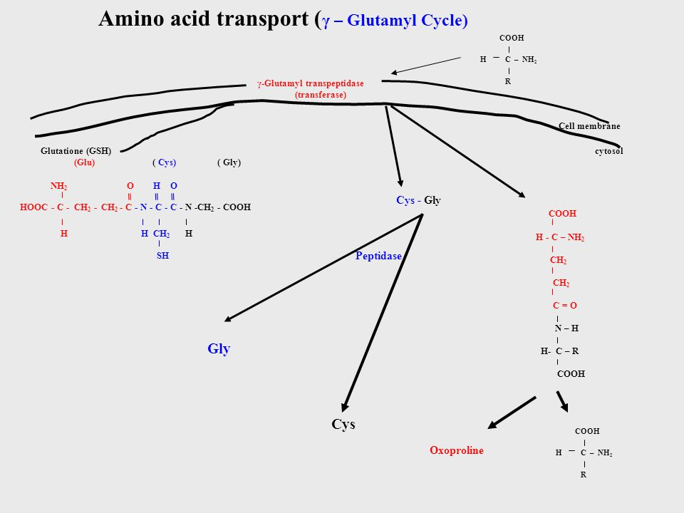 Amino acid transport (γ – Glutamyl Cycle)