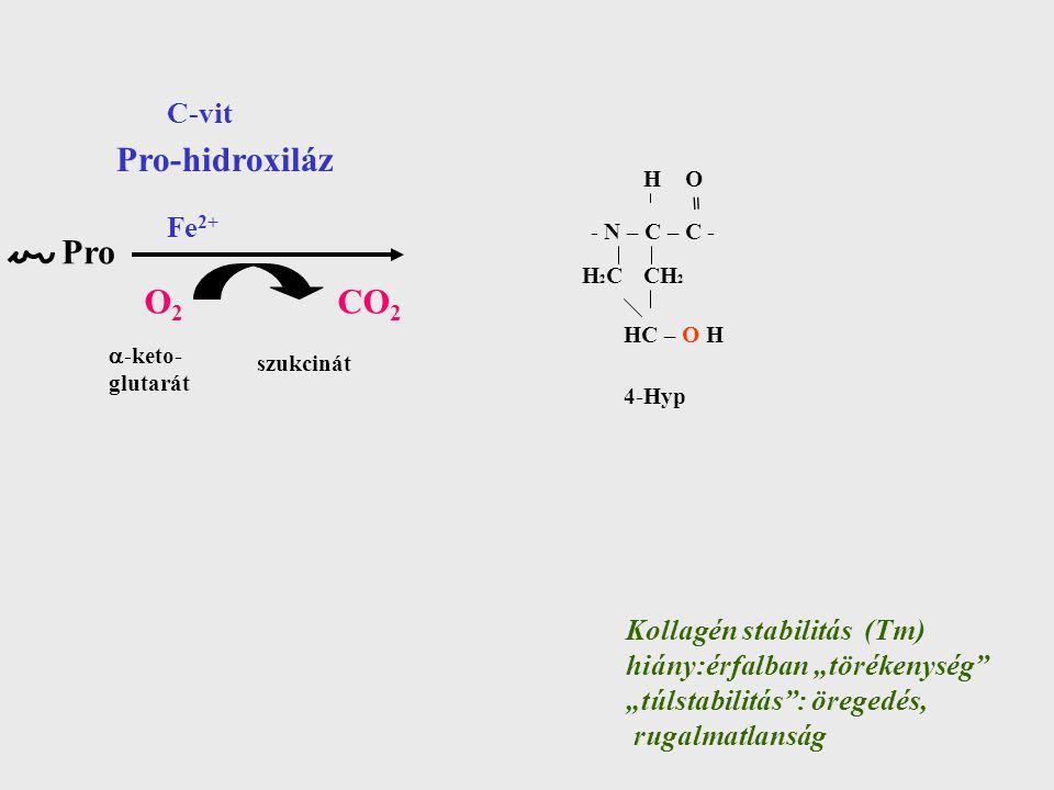 Pro-hidroxiláz Pro O2 CO2 C-vit Fe2+ Kollagén stabilitás (Tm)