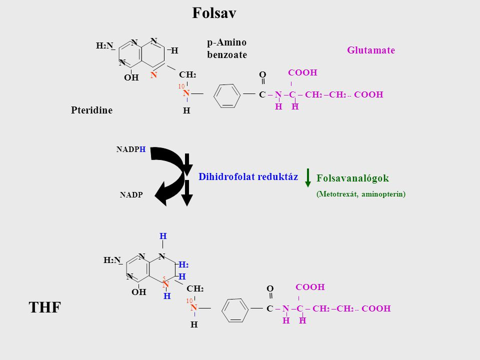 Folsav THF p-Amino benzoate Glutamate = Pteridine