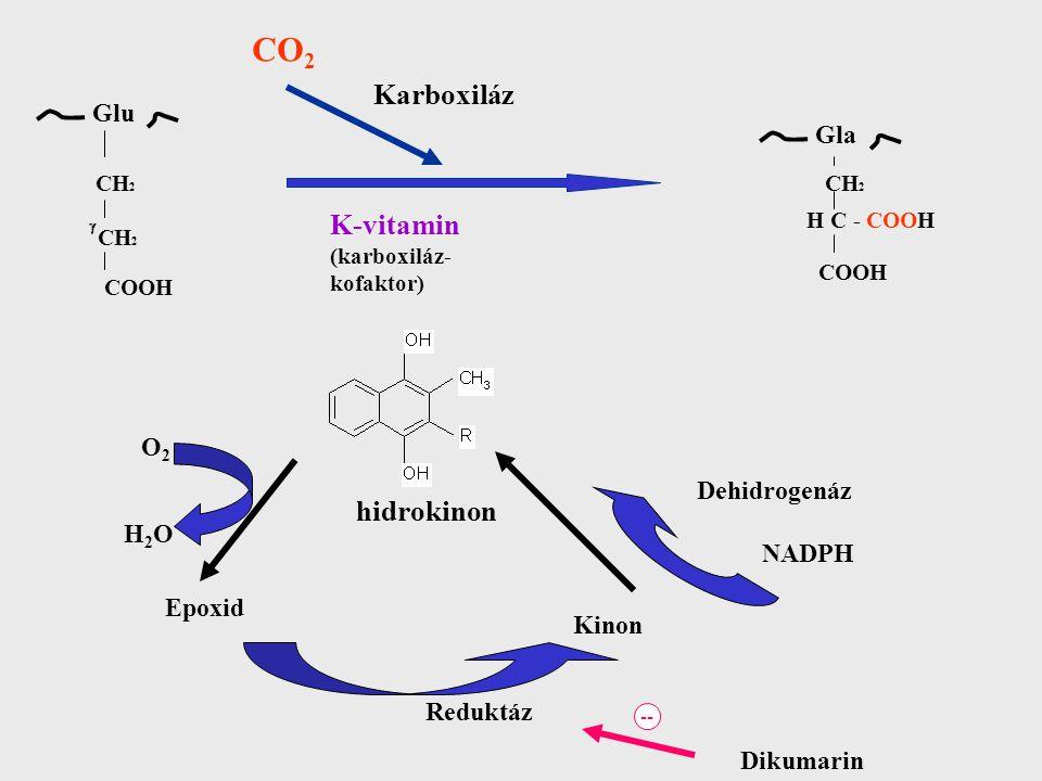 CO2 Karboxiláz K-vitamin hidrokinon O2 Dehidrogenáz NADPH H2O Epoxid