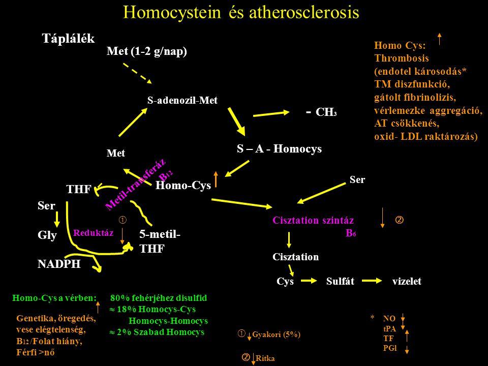 Homocystein és atherosclerosis