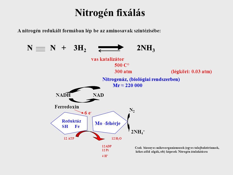 Nitrogén fixálás N N + 3H2 2NH3 N N + 3H2 2NH3