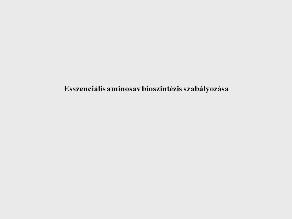 Esszenciális aminosav bioszintézis szabályozása