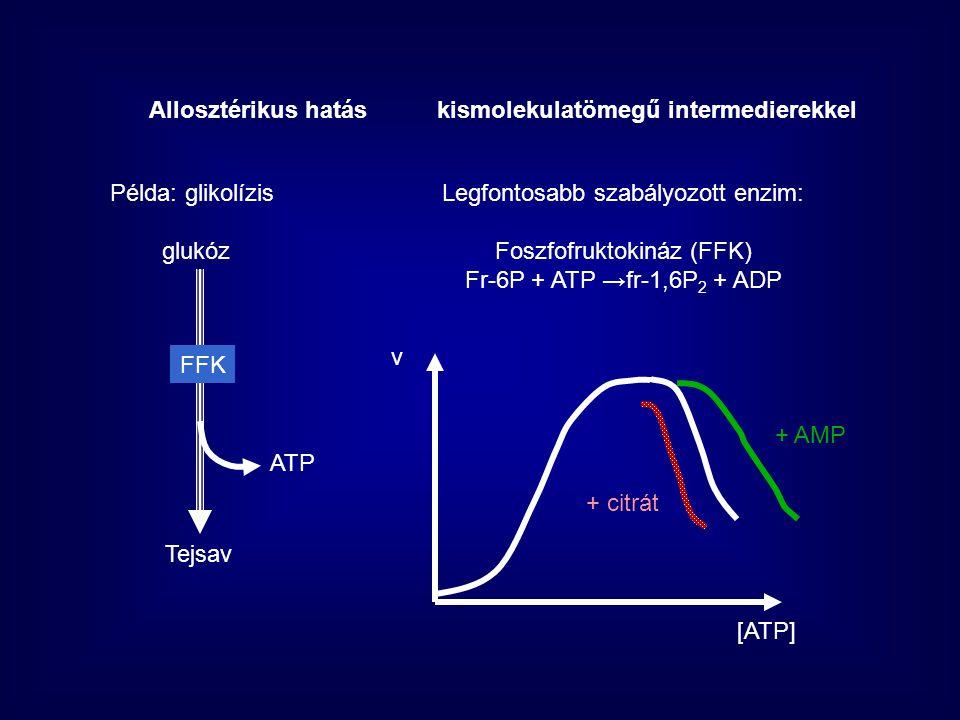 Allosztérikus hatás kismolekulatömegű intermedierekkel
