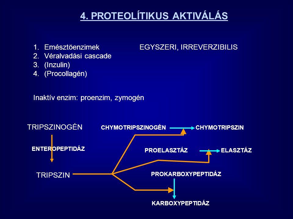 4. PROTEOLÍTIKUS AKTIVÁLÁS